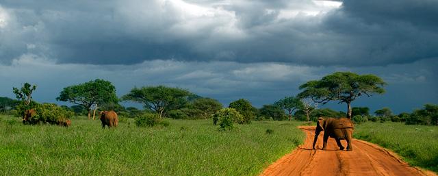 Stilleven in de bush in Kenia